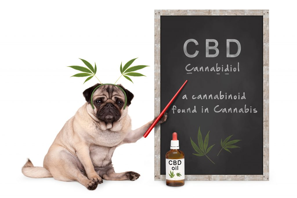 CBD for your pet dog